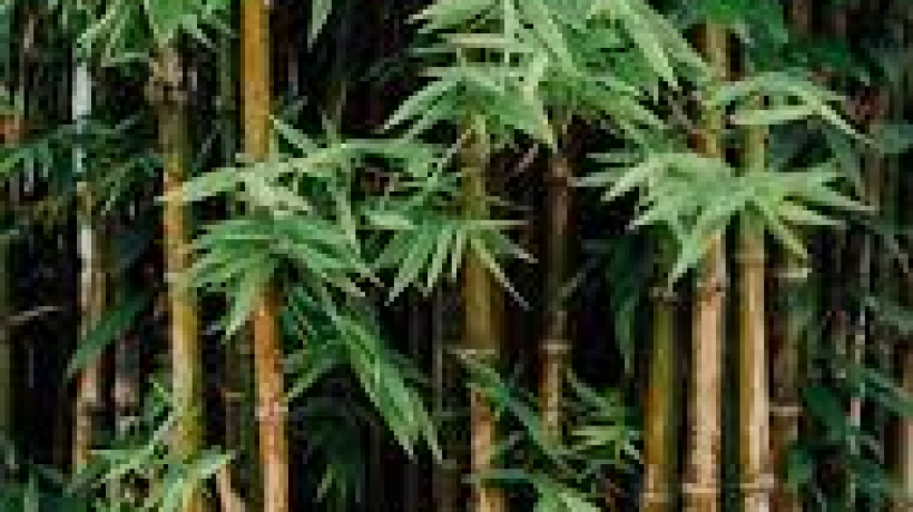 Bamboo Toothbrush – Better For Your Health & Eco-Friendly